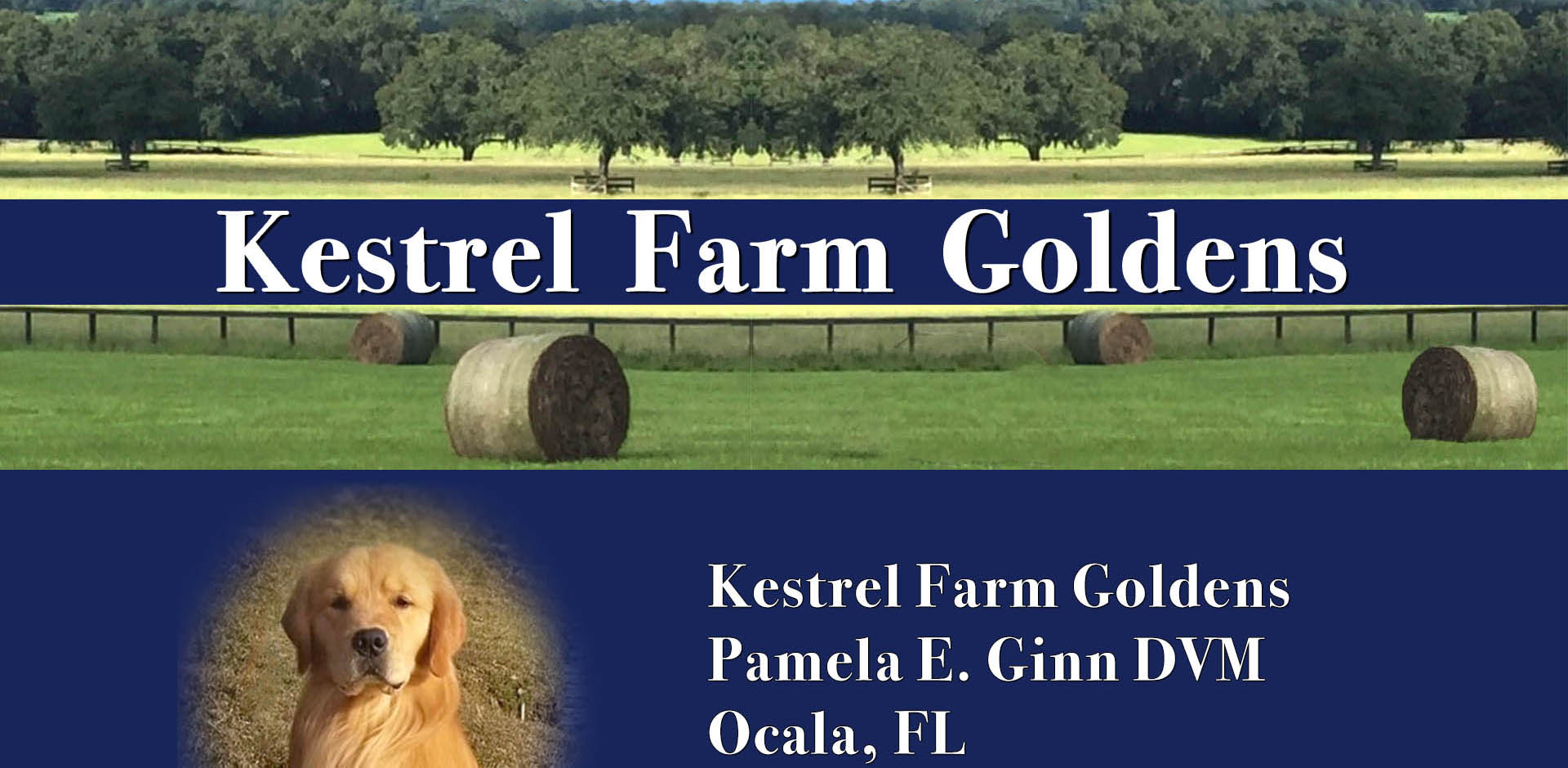 kestrel farm golden retrievers in ocala florida
